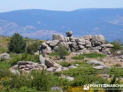 Pinar de Canencia y Mina de Plata del Indiano;viajes junio; floracion jerte